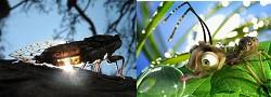 Cigale ou fourmi